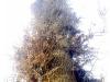 seltsamer Baum
