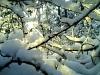 Winter 2009/2010 Querfurt Große Fichten