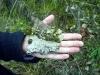Bruchstück Muschelkalk