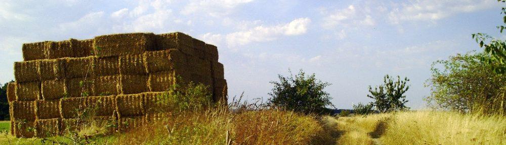 Eselsstieg